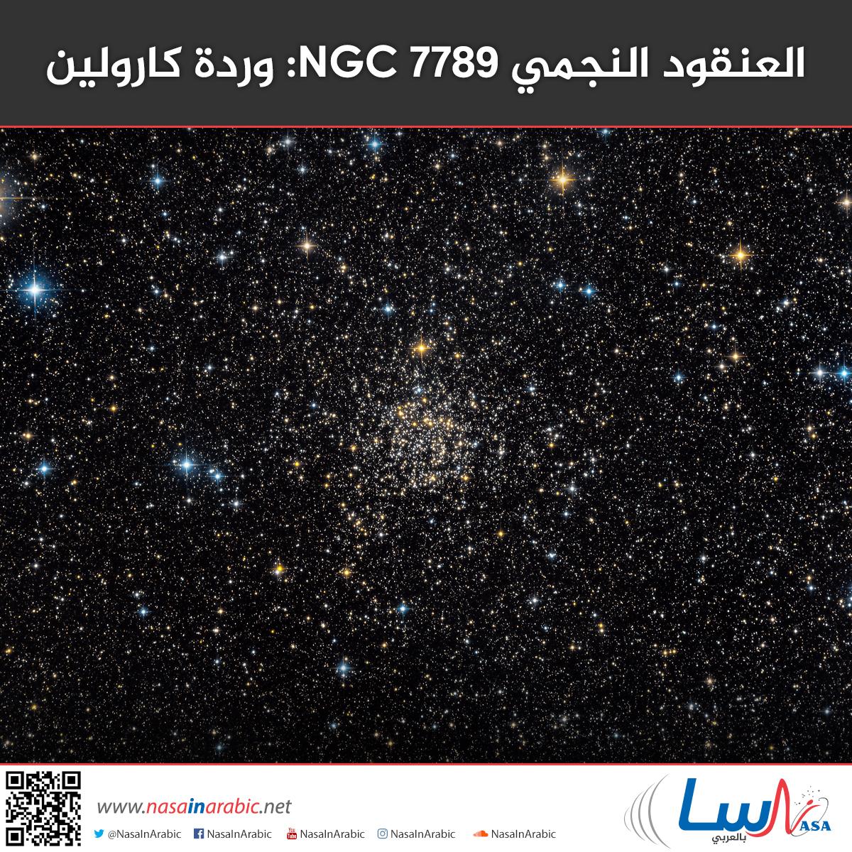 العنقود النجمي NGC 7789: وردة كارولين