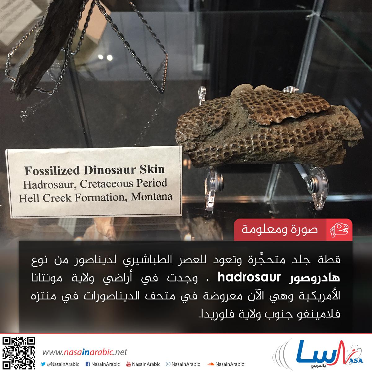 هادروصور Hadrosaur