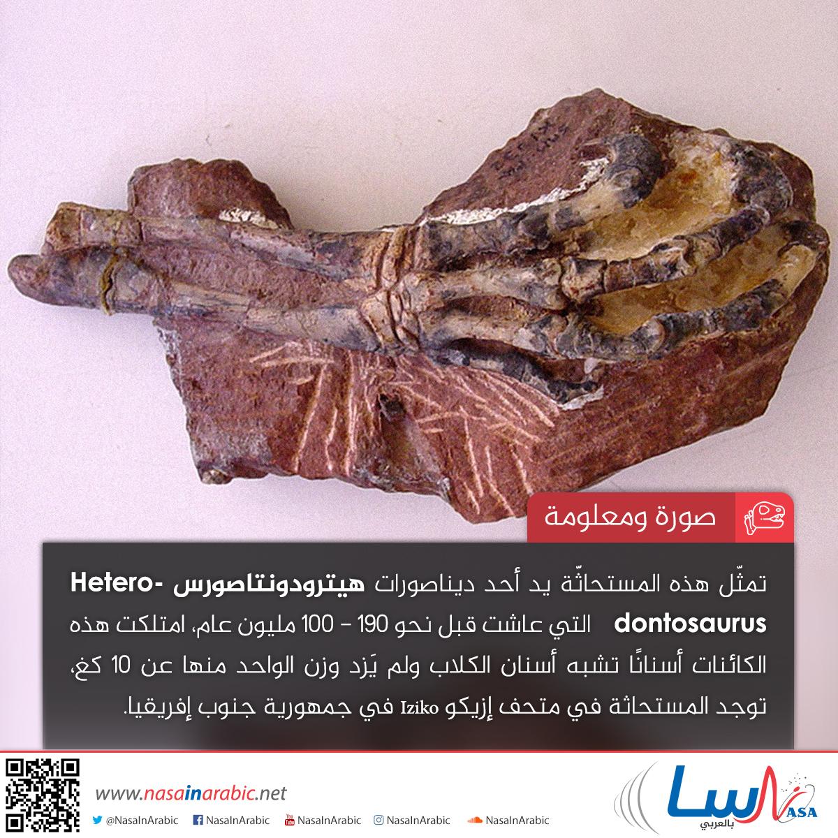 هيترودونتاصورس Heterodontosaurus