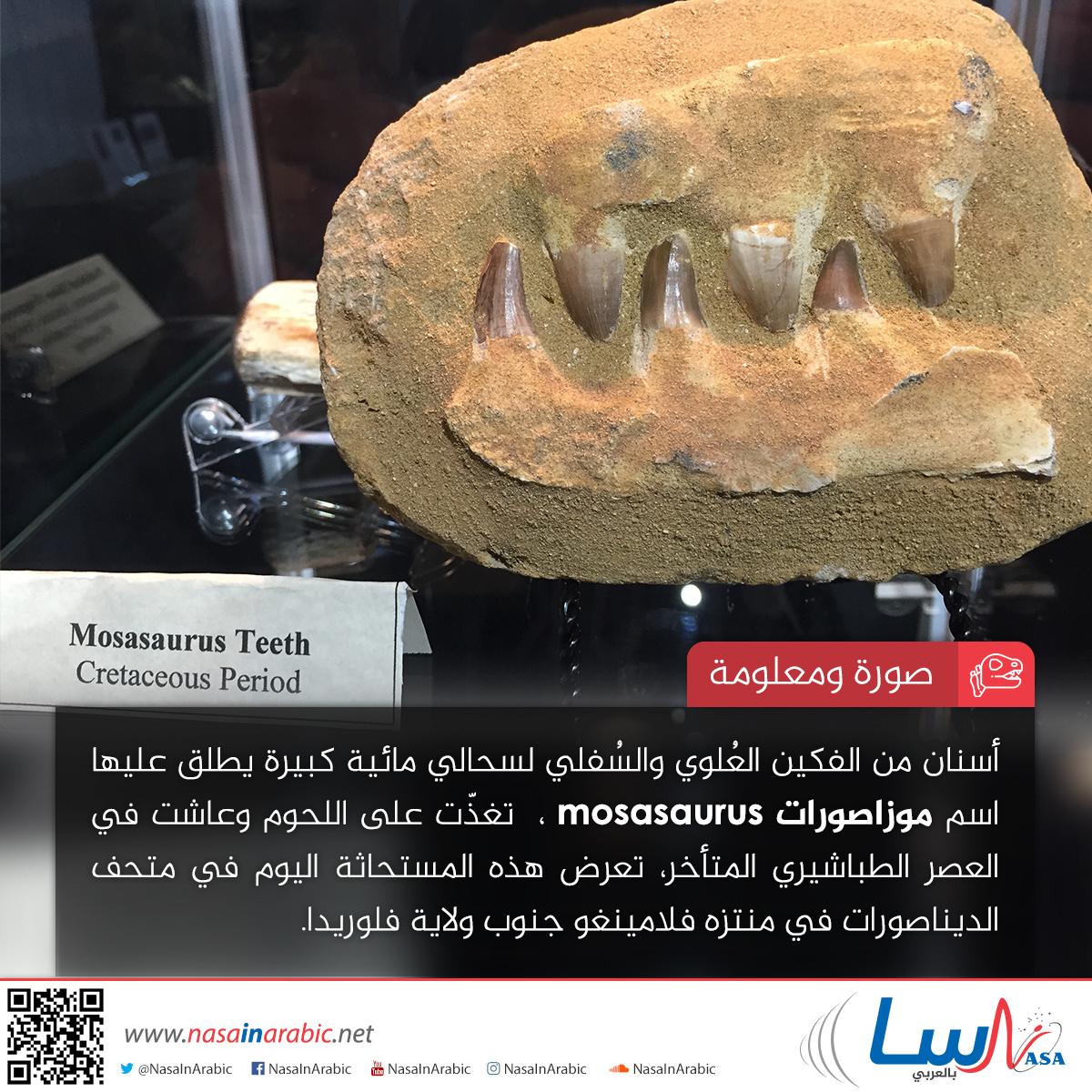موزاصورات Mosasaurus
