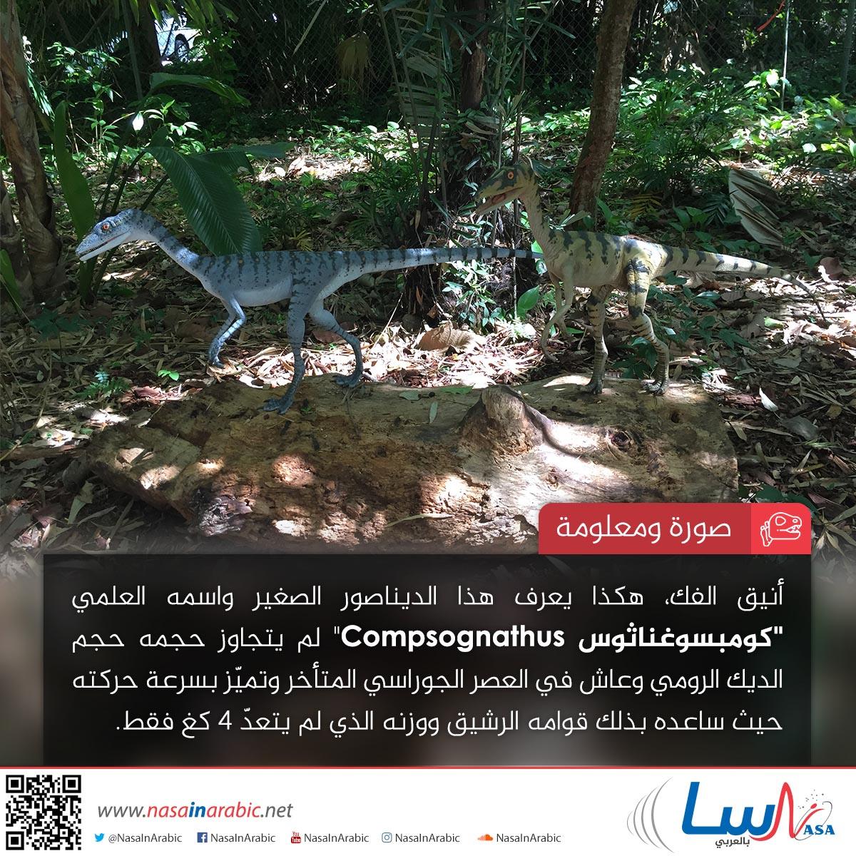 كومبسوغناثوس Compsognathus