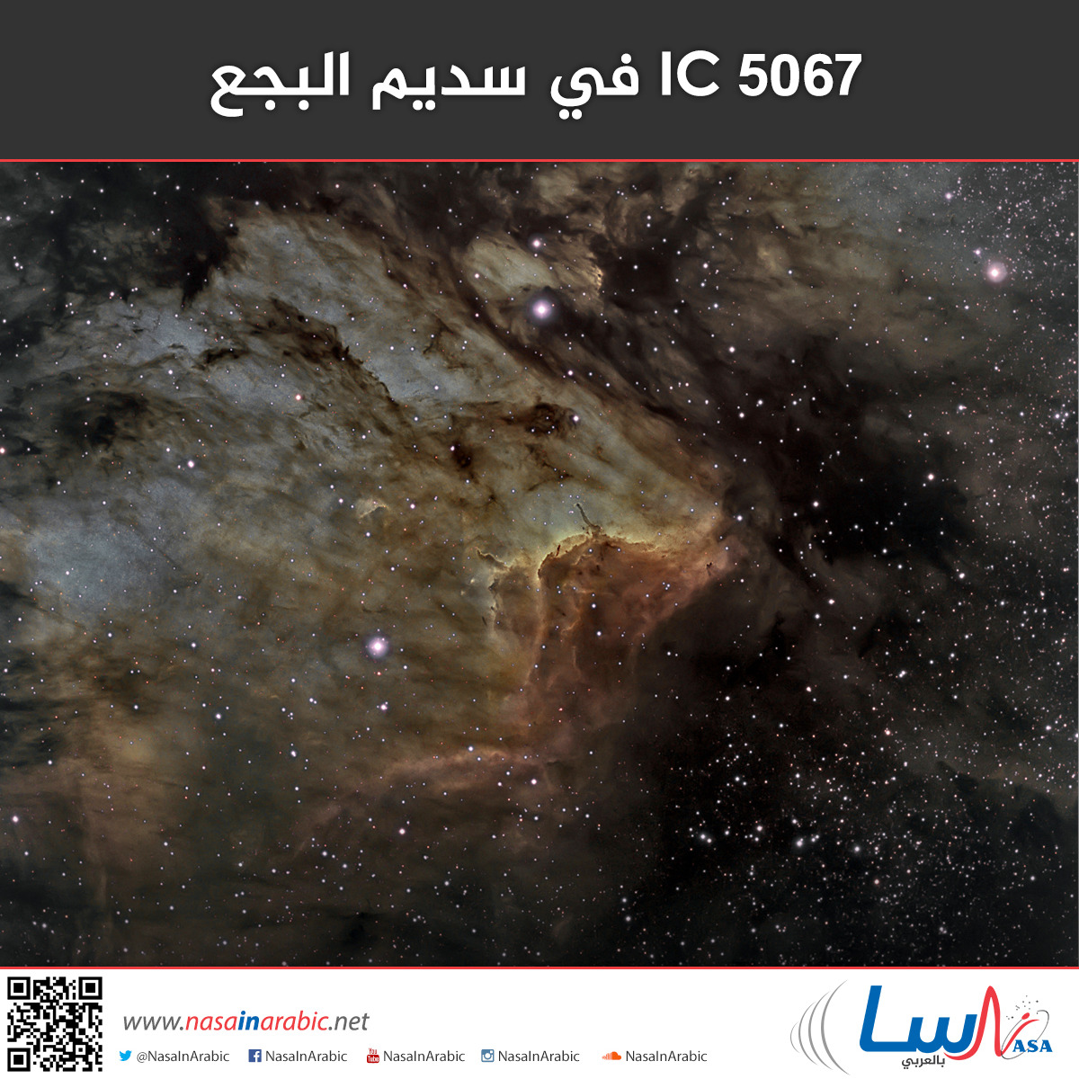 IC 5067 في سديم البجع
