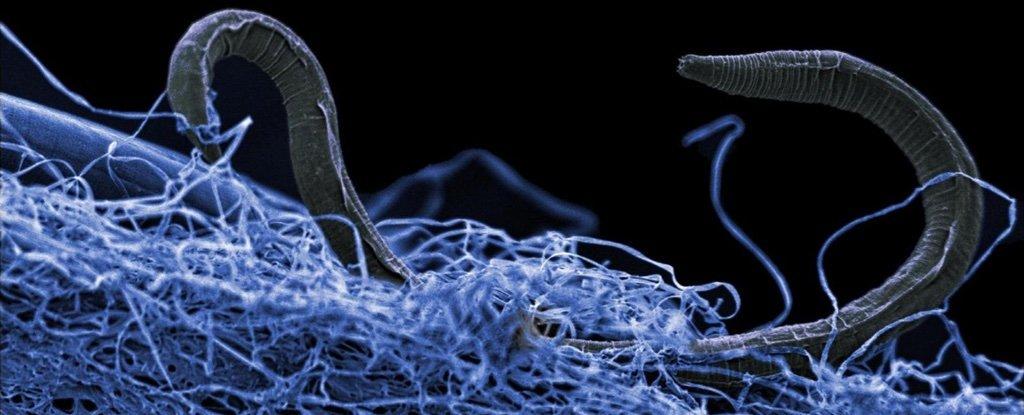 المادة الحيوية المظلمة: محيط ﺣﻴﻮﻱ ﻫﺎﺋﻞ ﻣﺨﺘﺒﺊ ﺗﺤﺖ ﺳﻄﺢ ﺍﻷﺭﺽ
