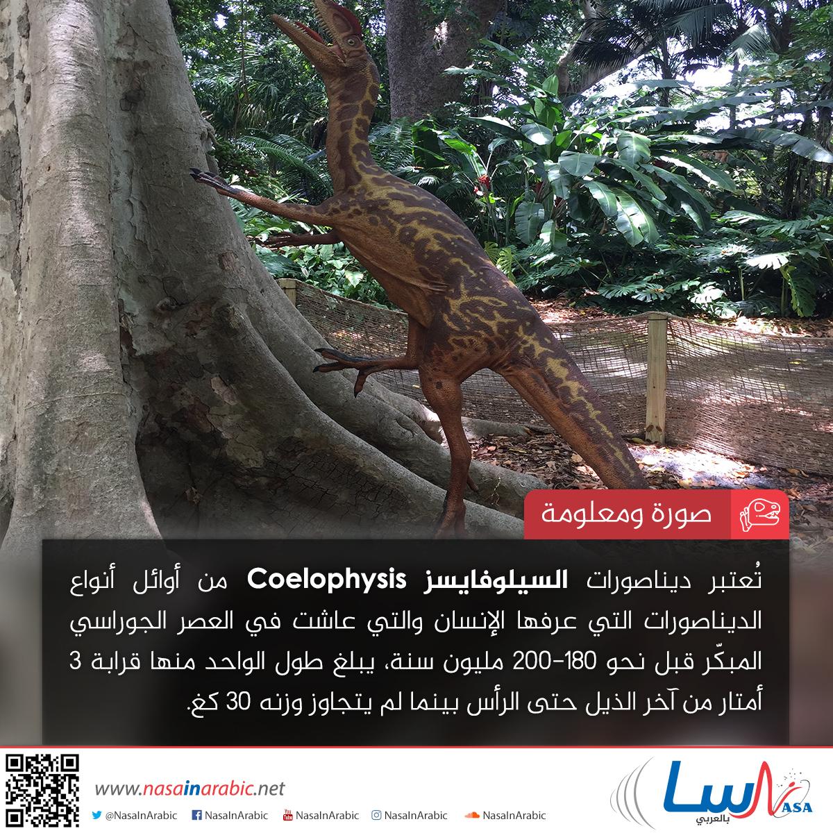 السيلوفايسز Coelophysis