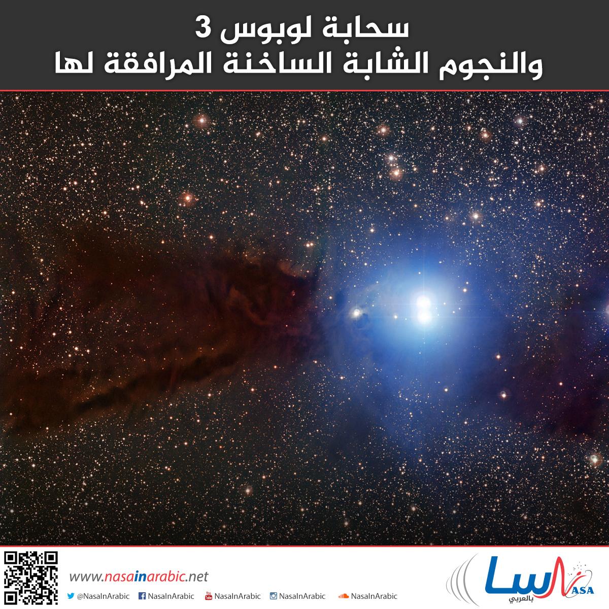 سحابة لوبوس 3، والنجوم الشابة الساخنة المرافقة لها