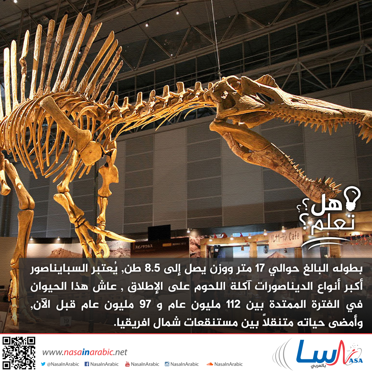 السبايناصور