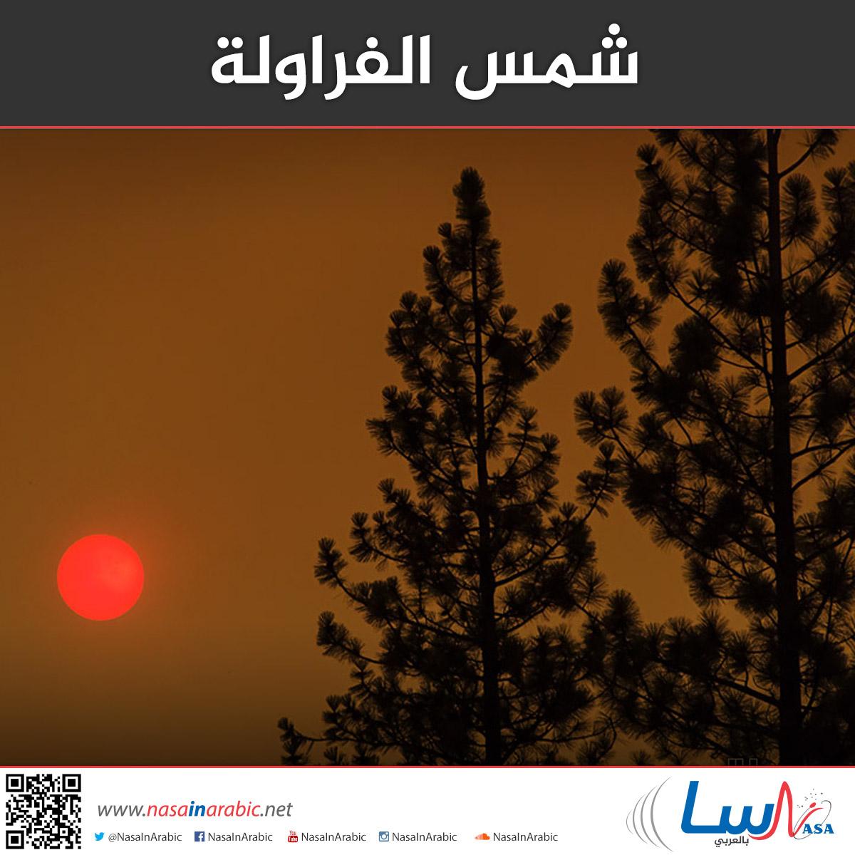 شمس الفراولة