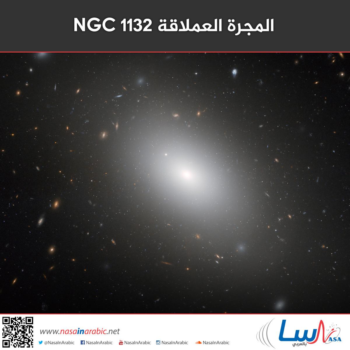 المجرة العملاقة NGC 1132