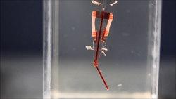 نعم، صار للروبوتات عضلات حية