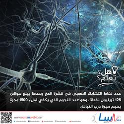 عدد نقاط التشابك العصبي في قشرة المخ