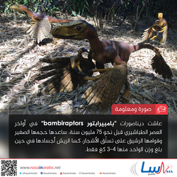 بامبيرابتور Bambiraptors