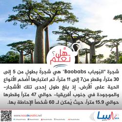 شجرة البوباب