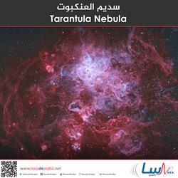 سديم العنكبوت Tarantula Nebula