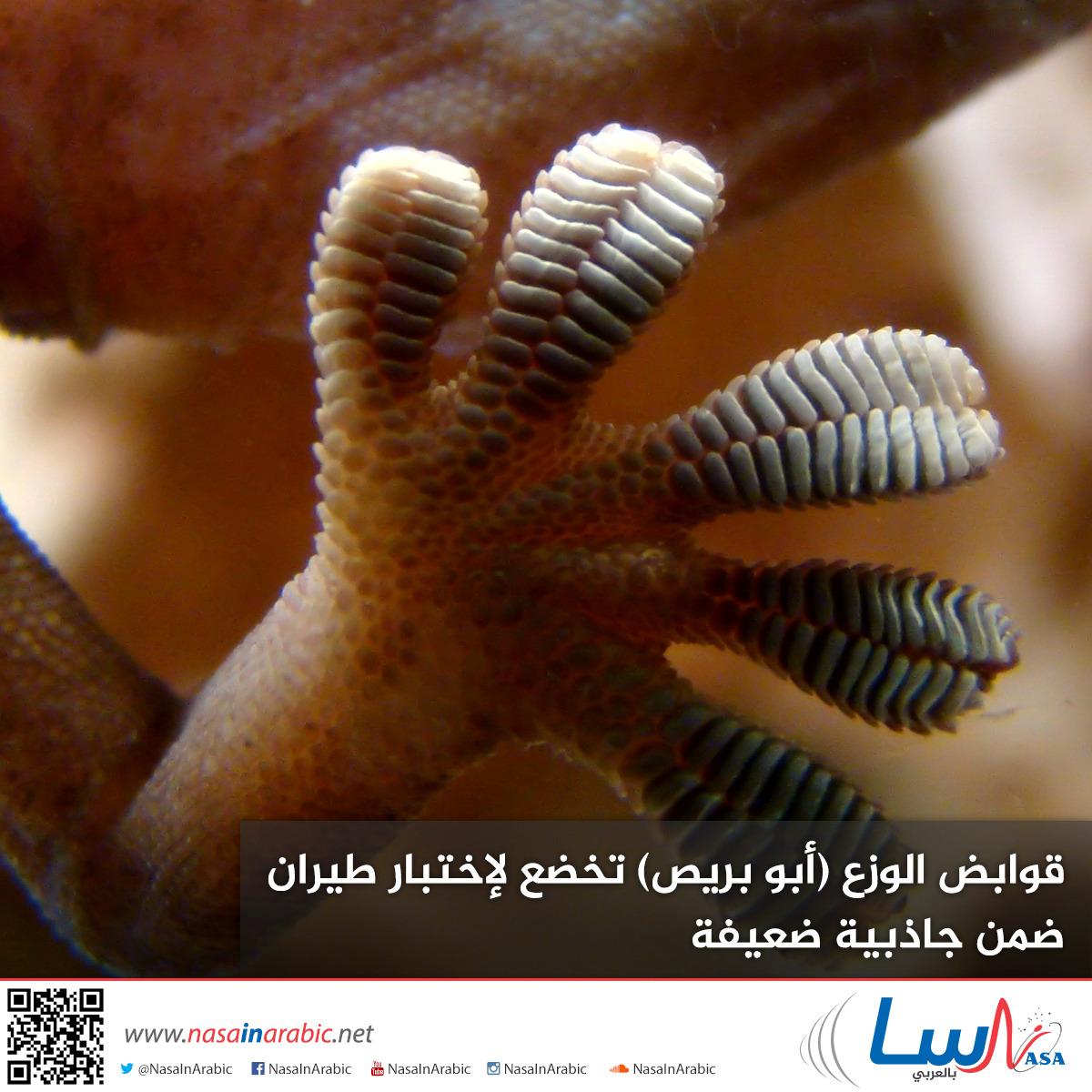 قوابض الوزع (أبو بريص) تخضع لإختبار طيران ضمن جاذبية ضعيفة
