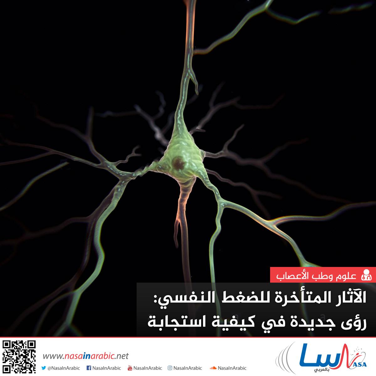 الآثار المتأخرة للضغط النفسي: رؤى جديدة في كيفية استجابة الدماغ للصدمات