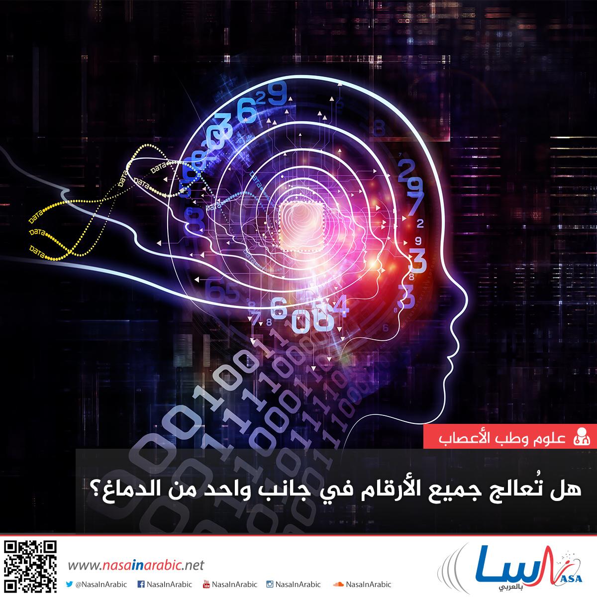 هل تُعالج جميع الأرقام في جانب واحد من الدماغ؟