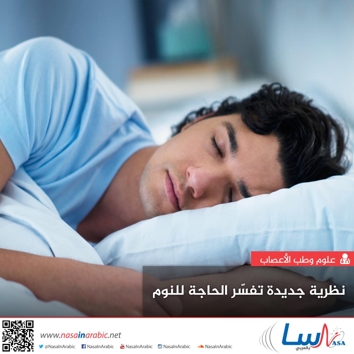 نظرية جديدة تفسّر الحاجة للنوم