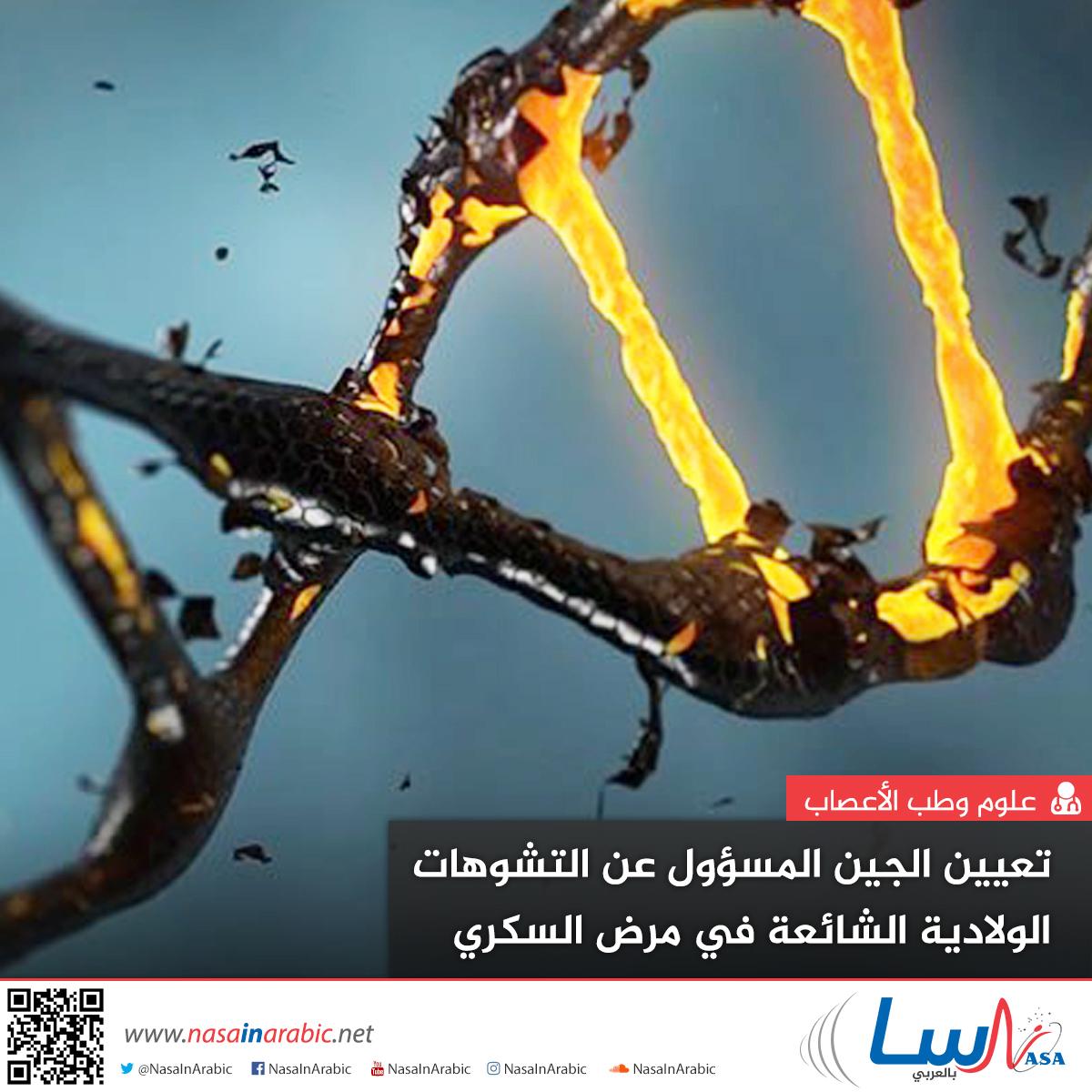 تعيين الجين المسؤول عن التشوهات الولادية الشائعة في مرض السكري