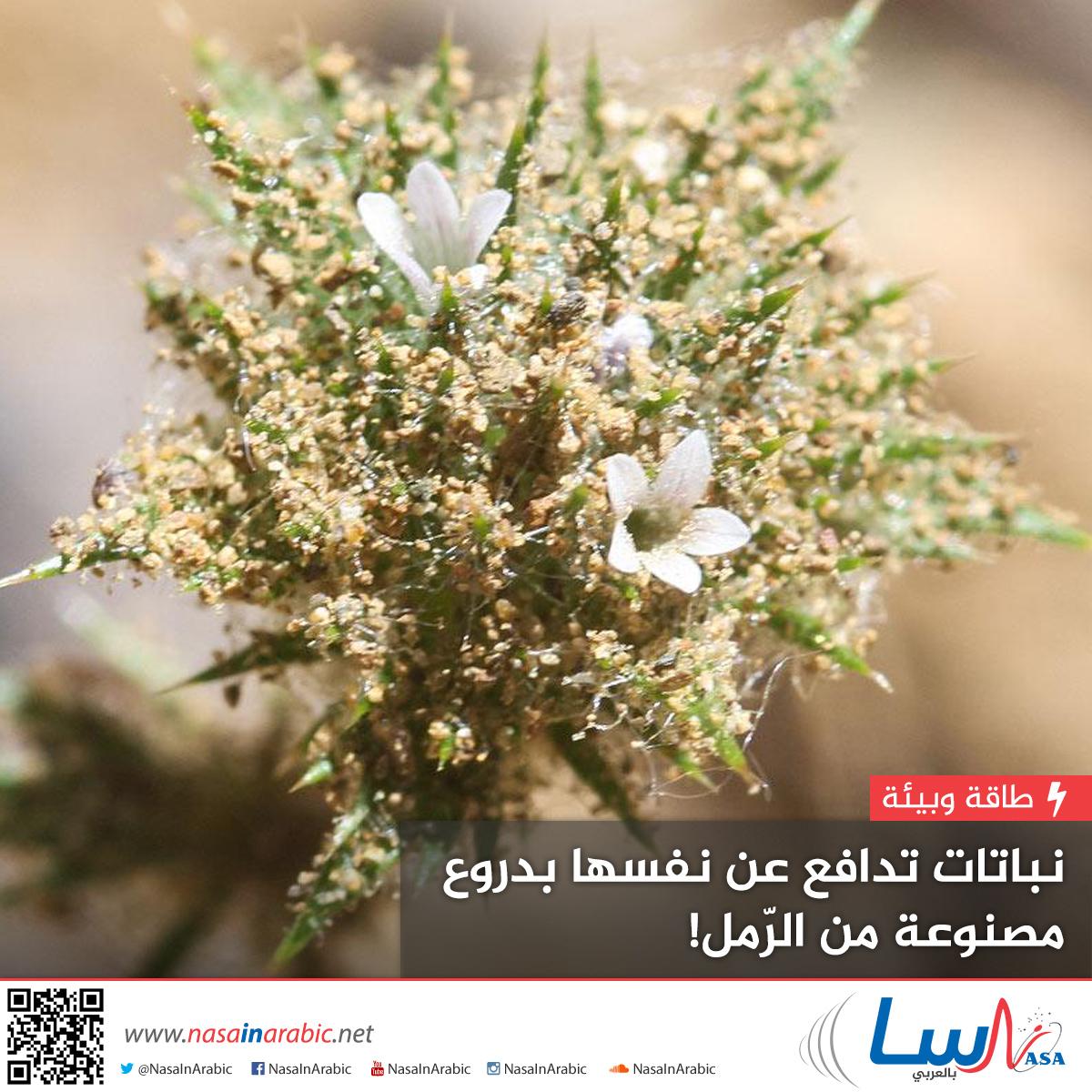 نباتات تدافع عن نفسها بدروع مصنوعة من الرّمل!