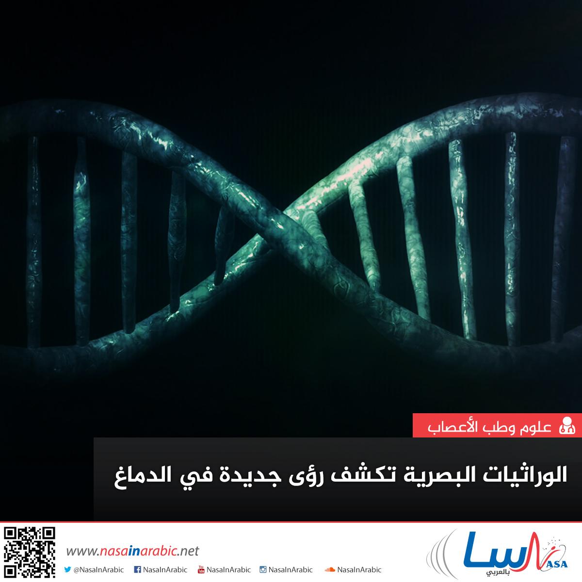 الوراثيات البصرية تكشف رؤًى جديدة في الدماغ