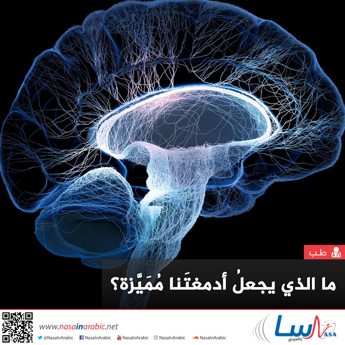 إنَّ الدماغَ البشريَّ بكلِّ تعقيداته المذهلة هو نتاج ملايين السنين من التطوُّر، ولكن ما الذي يجعلُ أدمغتَنا مُمَيَّزة؟