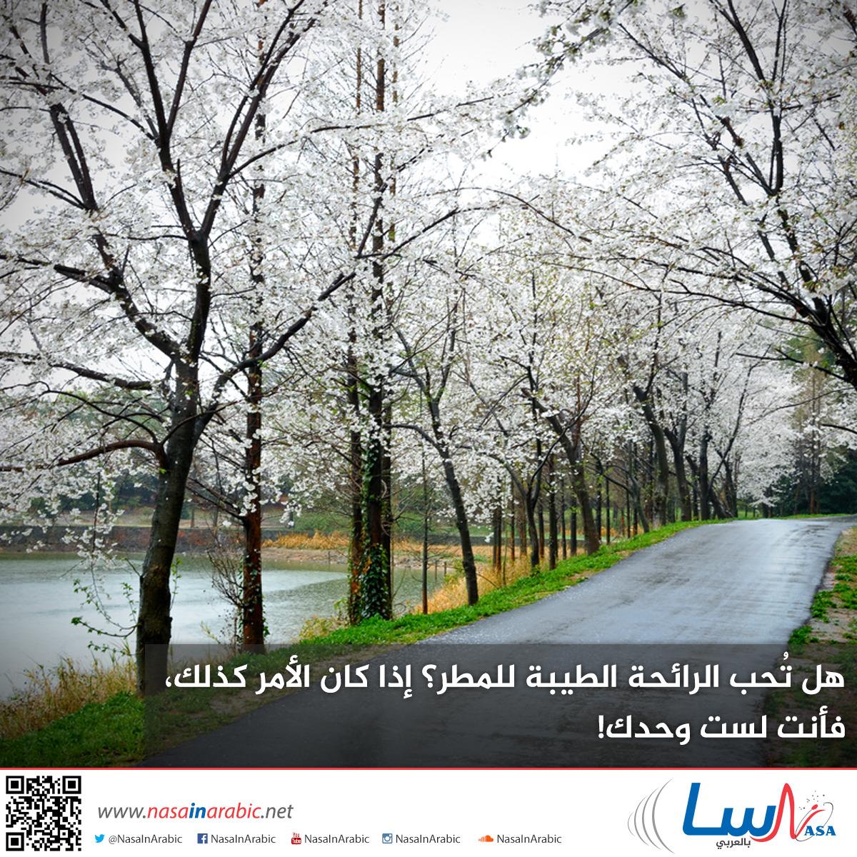 هل تُحب الرائحة الطيبة للمطر؟ إذا كان الأمر كذلك، فأنت لست وحدك!