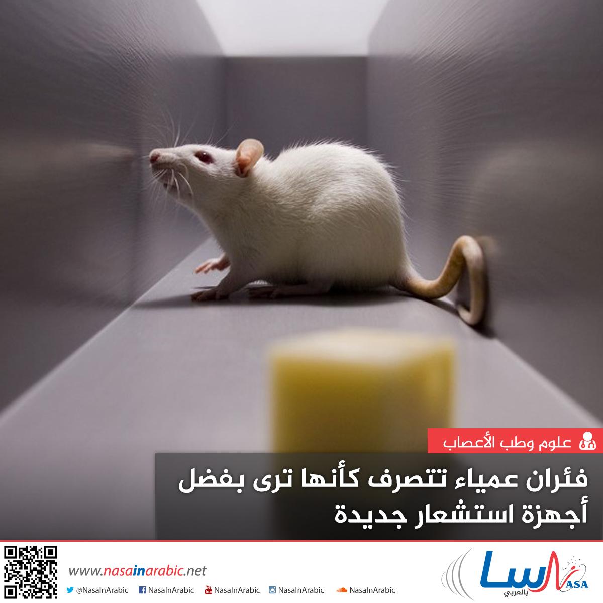فئران عمياء تتصرف كأنها ترى بفضل أجهزة استشعار جديدة