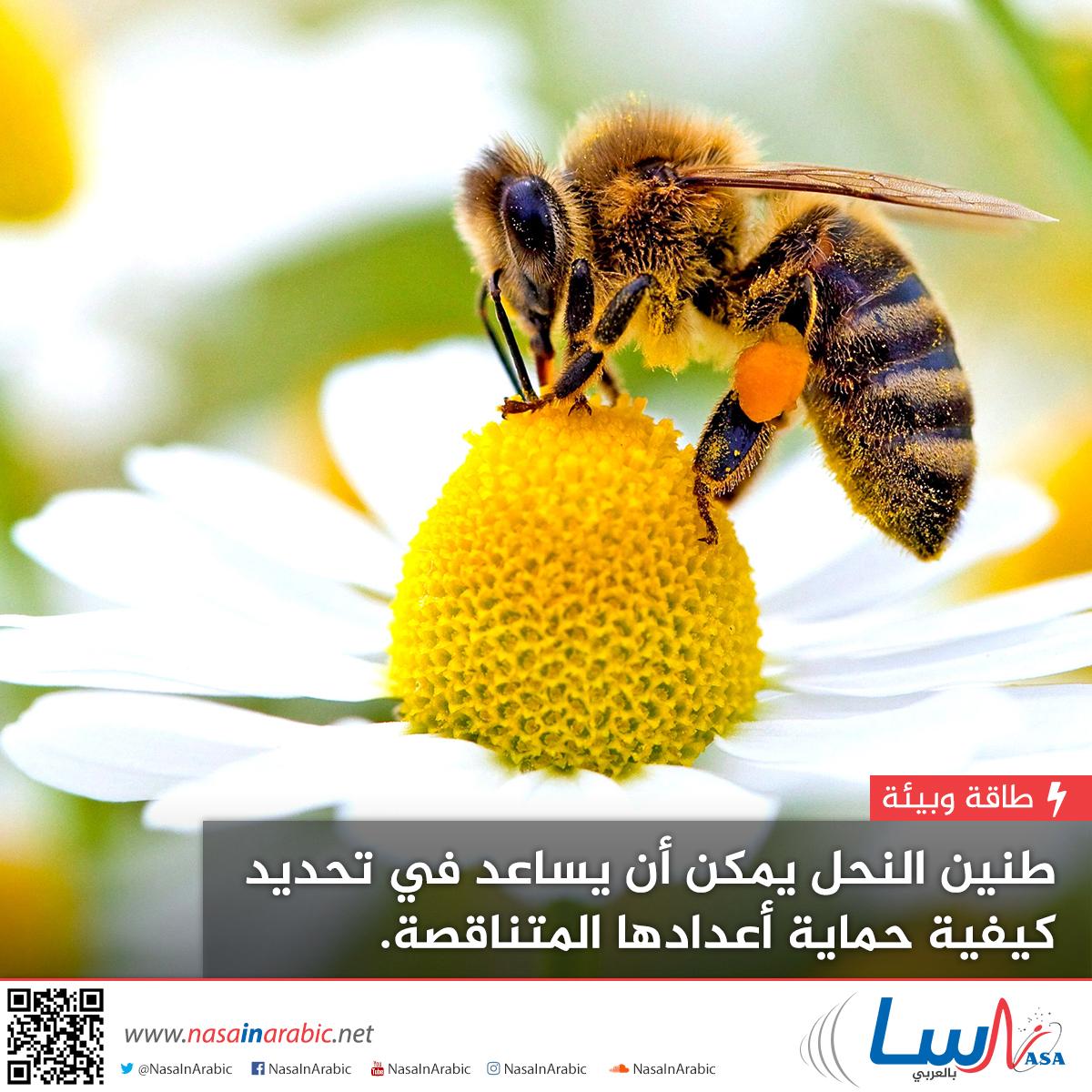 طنين النحل يمكن أن يساعد في تحديد كيفية حماية أعدادها المتناقصة