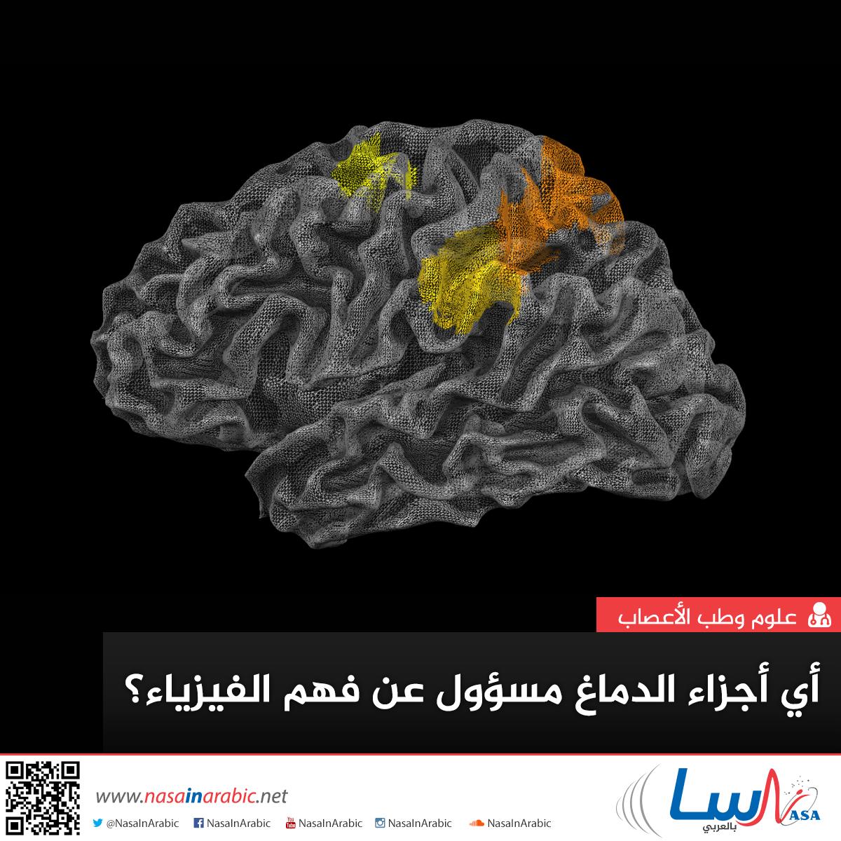 أي أجزاء الدماغ مسؤول عن فهم الفيزياء؟