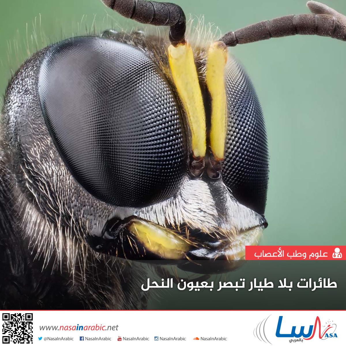 طائرات بلا طيار تبصر بعيون النحل