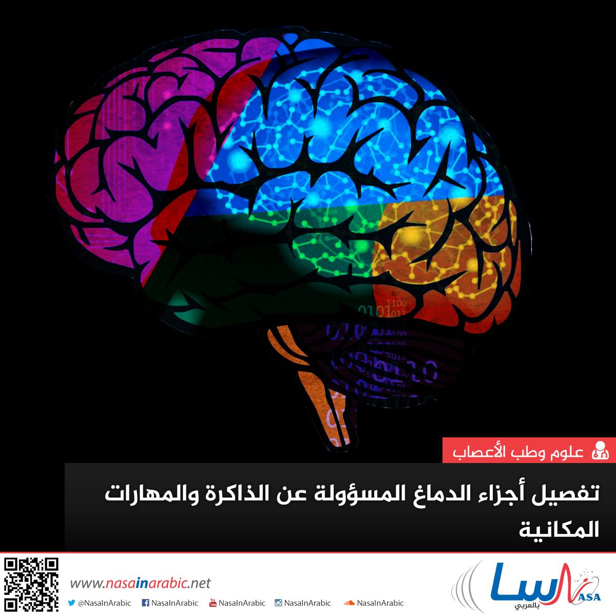 تفصيل أجزاء الدماغ المسؤولة عن الذاكرة والمهارات المكانية