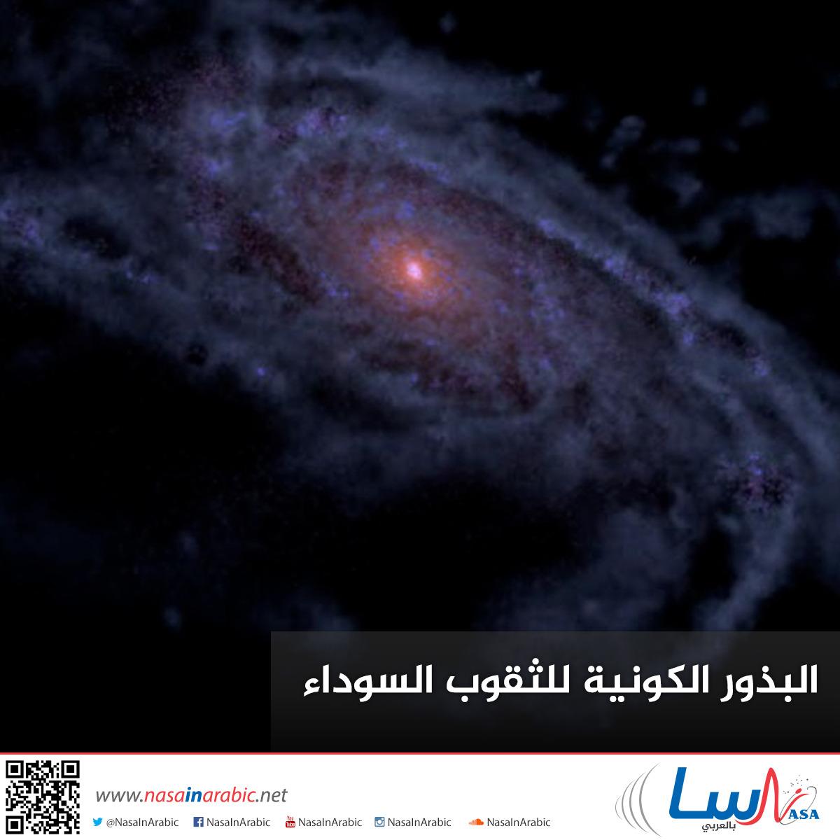 البذور الكونية للثقوب السوداء