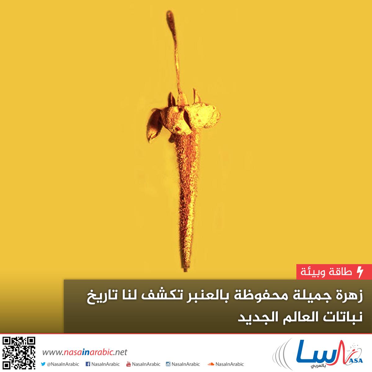 زهرة جميلة محفوظة بالعنبر تكشف لنا تاريخ نباتاتٍ من العالم الجديد