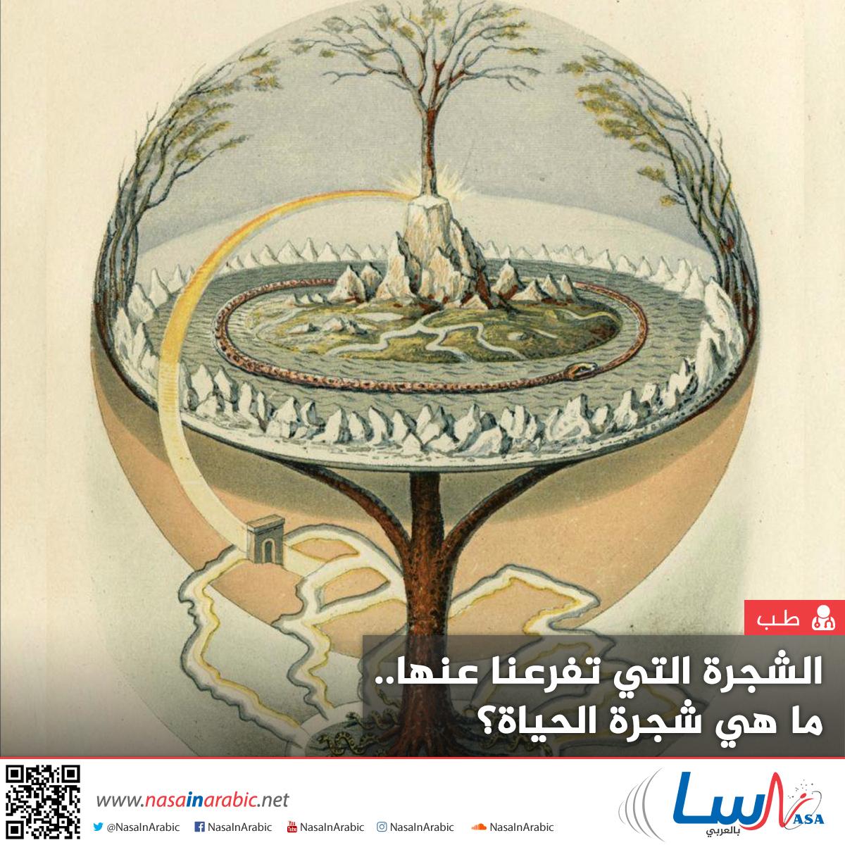 الشجرة التي تفرعنا عنها.. ما هي شجرة الحياة؟