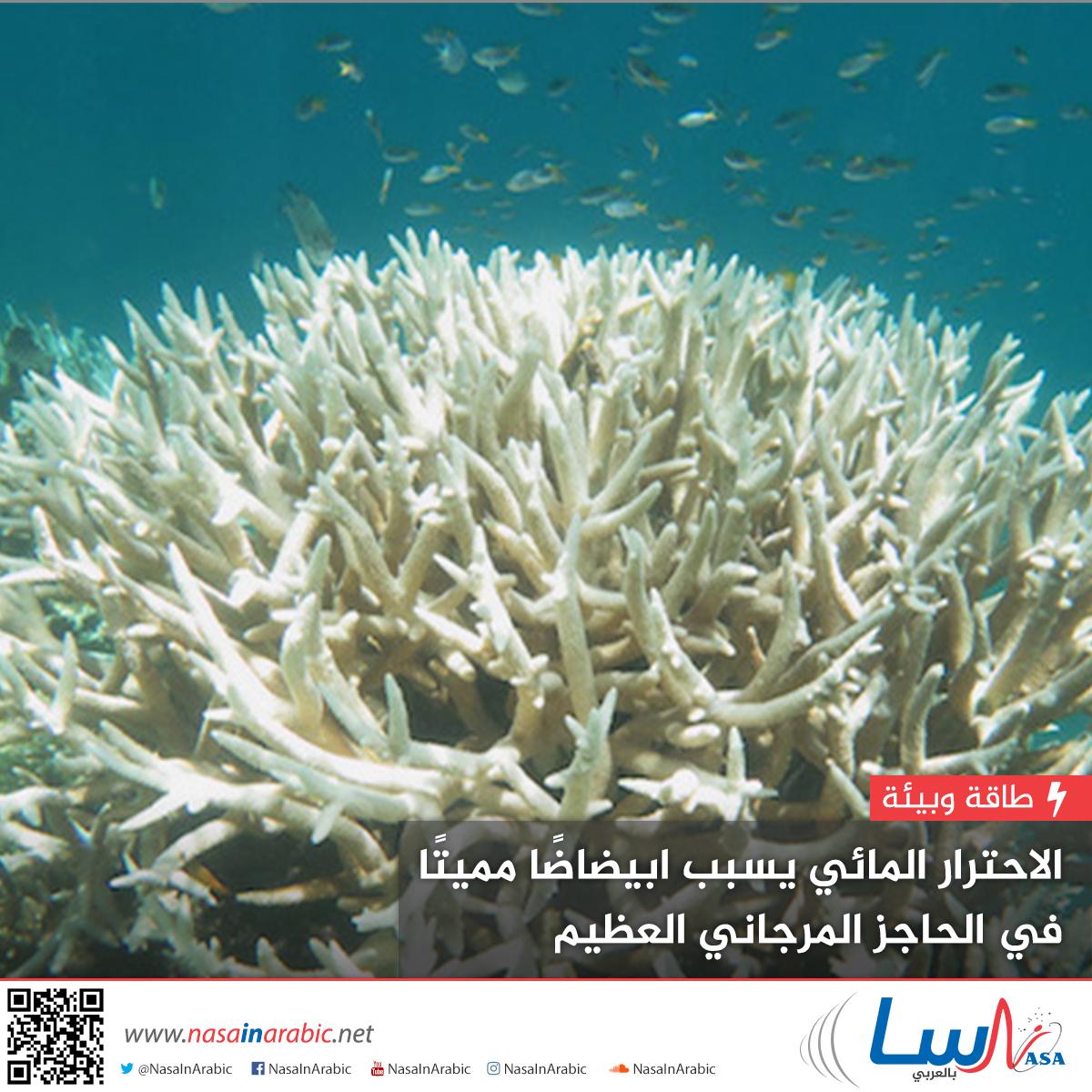 الاحترار المائي يسبب ابيضاضًا مميتًا في الحاجز المرجاني العظيم