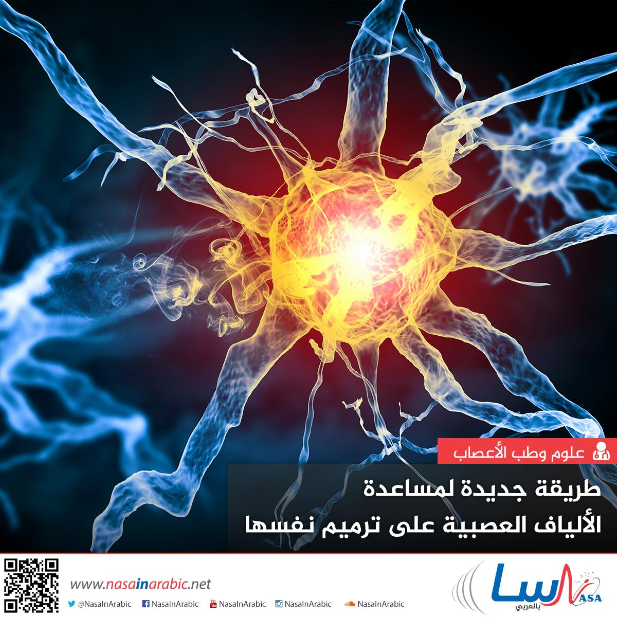 طريقة جديدة لمساعدة الألياف العصبية على ترميم نفسها