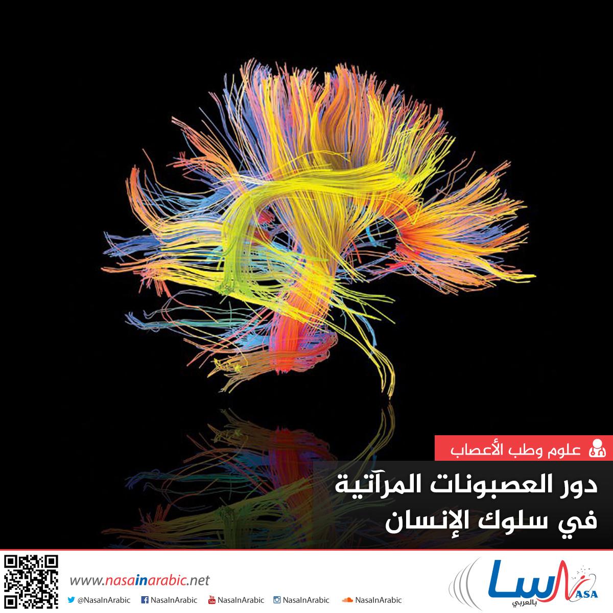 دور العصبونات المرآتية في سلوك الإنسان
