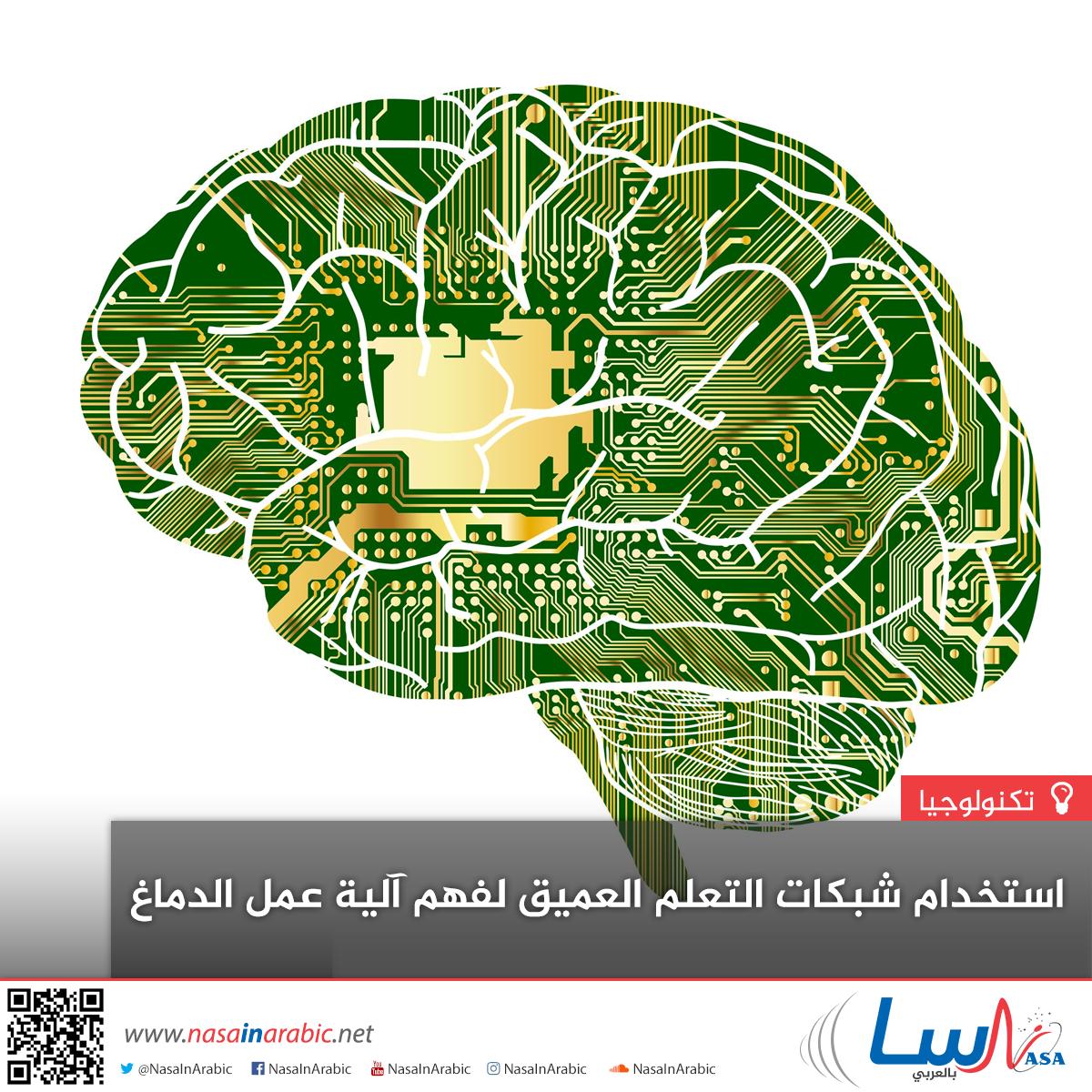 استخدام شبكات التعلم العميق لفهم آلية عمل الدماغ