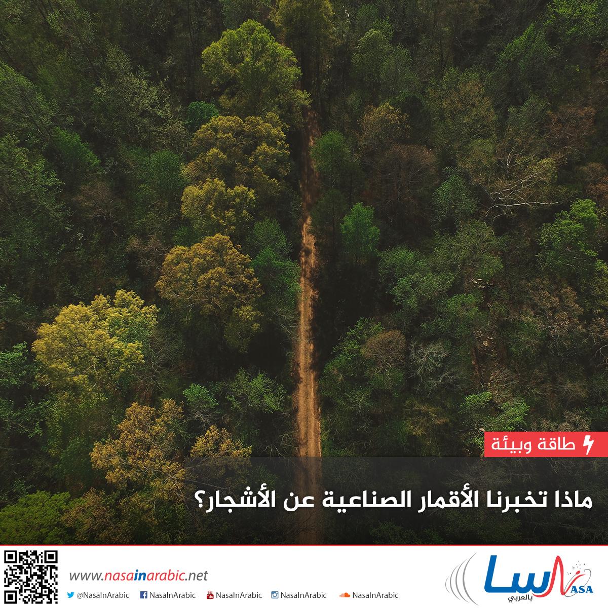 ماذا تخبرنا الأقمار الصناعية عن الأشجار؟