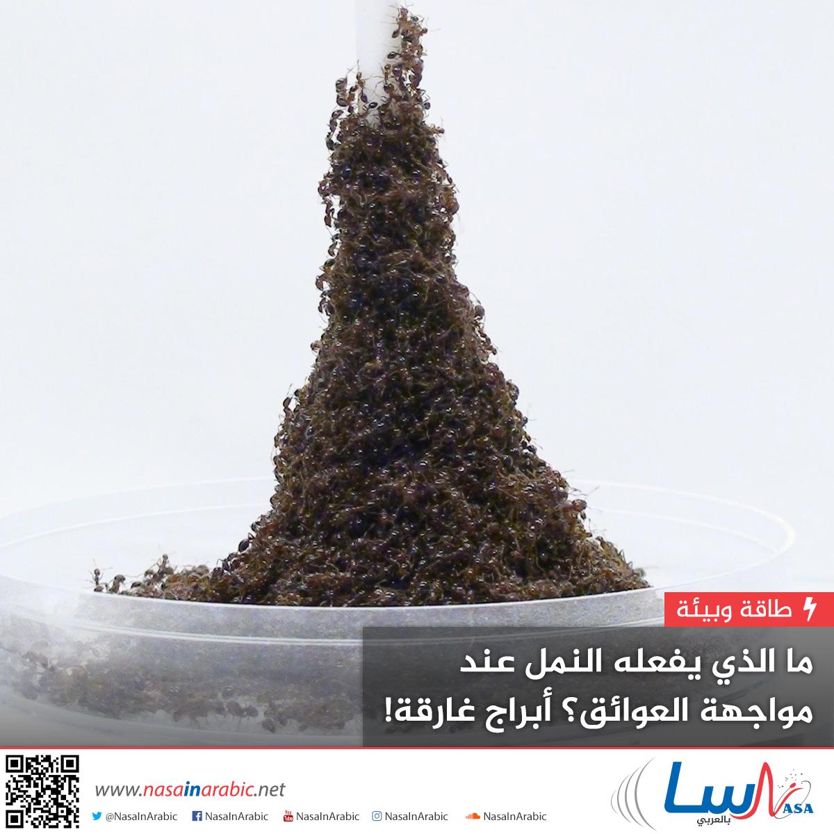 ما الذي يفعله النمل عند مواجهة العوائق؟ أبراج غارقة!
