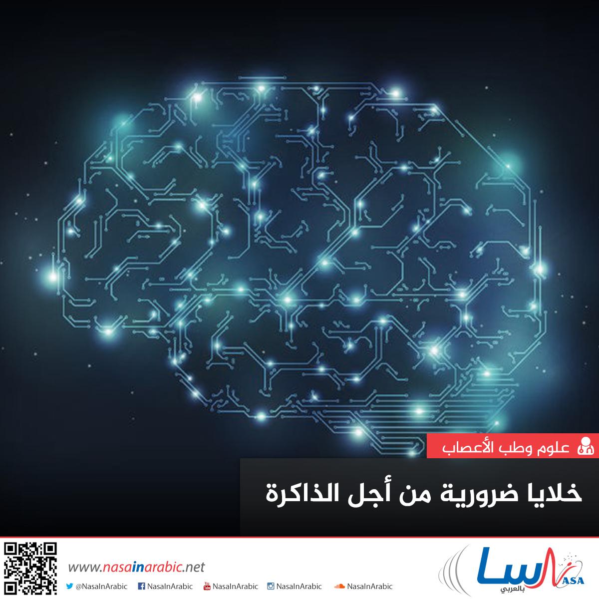 خلايا ضرورية من أجل الذاكرة