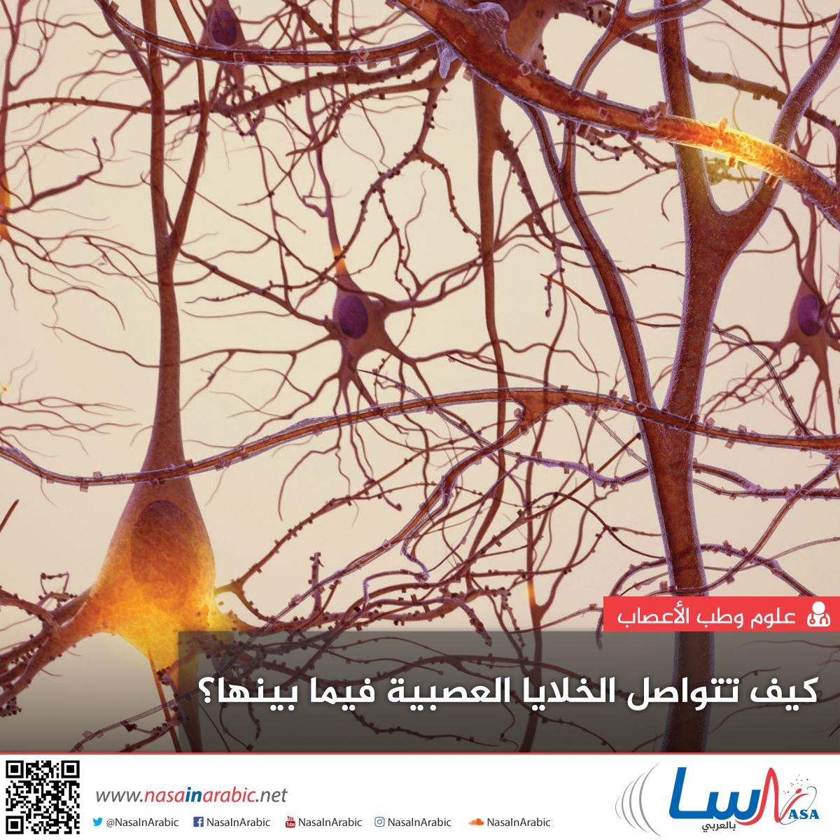 كيف تتواصل الخلايا العصبية فيما بينها؟
