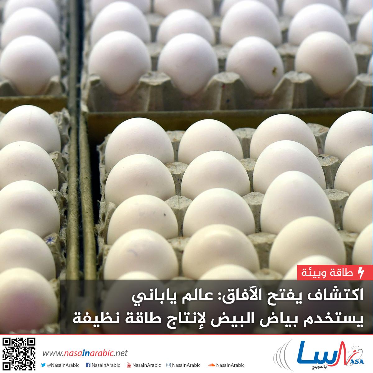 اكتشاف يفتح الآفاق: عالم ياباني يستخدم بياض البيض لإنتاج طاقة نظيفة