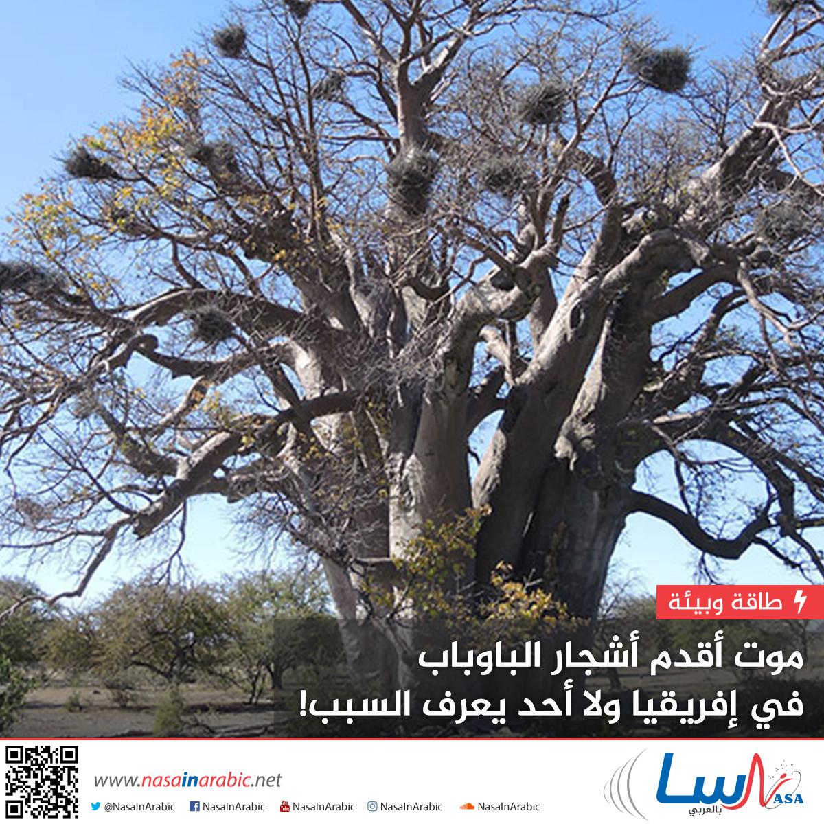 موت أقدم أشجار الباوباب في إفريقيا ولا أحد يعرف السبب!