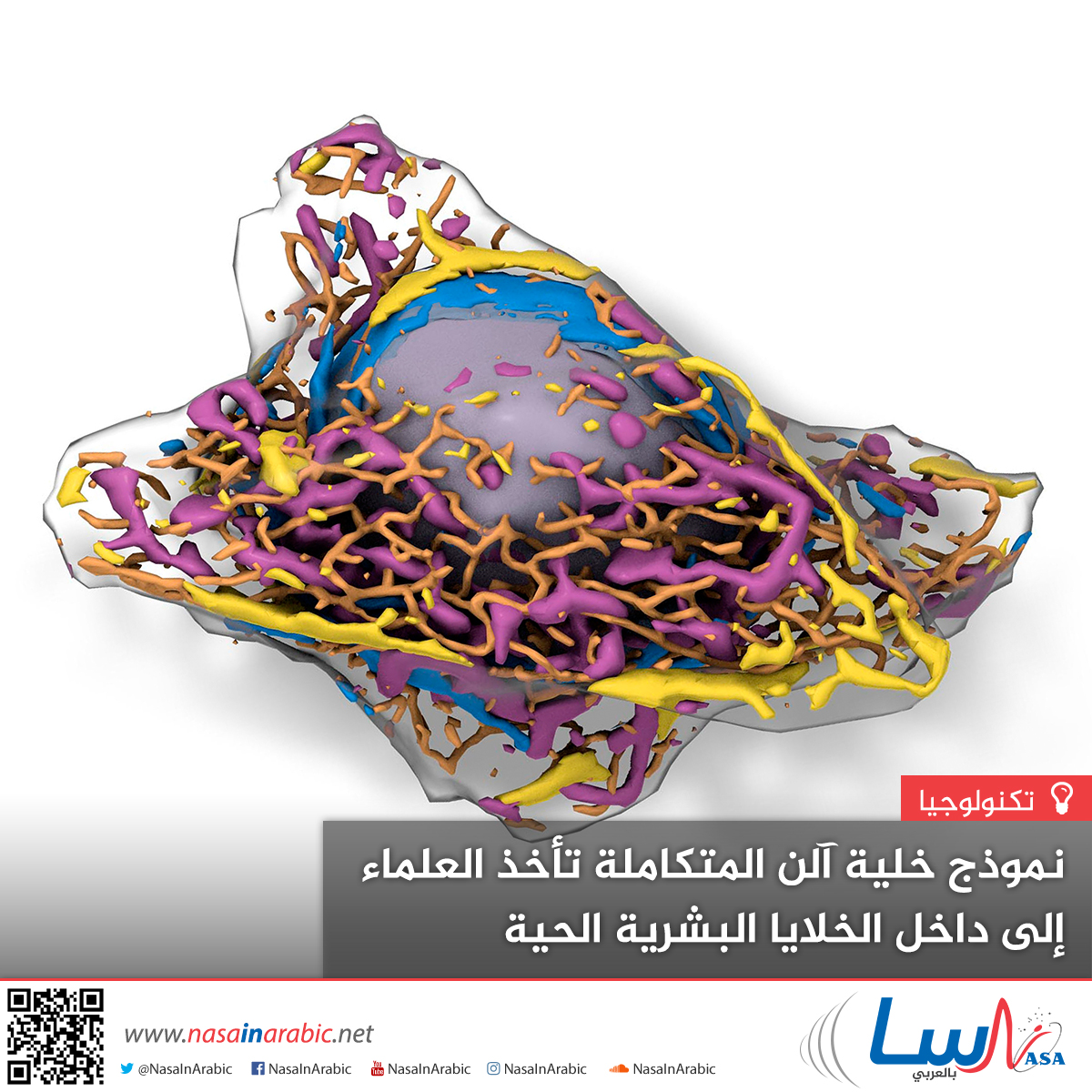نموذج خلية آلن المتكاملة تأخذ العلماء إلى داخل الخلايا البشرية الحية