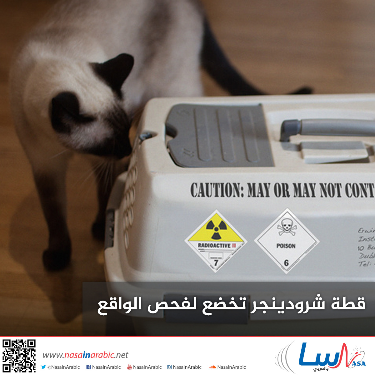 قطة شرودينجر تخضع لفحص الواقع