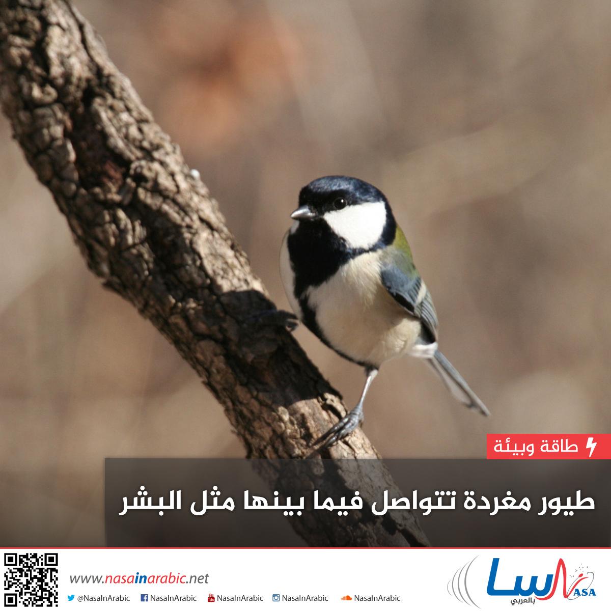 طيور مغردة تتواصل فيما بينها مثل البشر