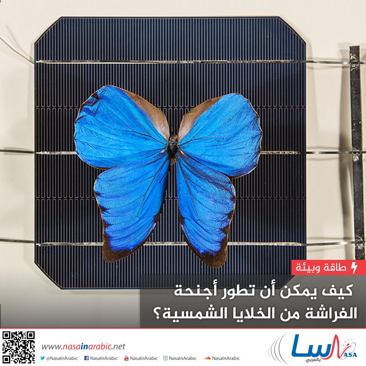 كيف يمكن أن تطور أجنحة الفراشة من الخلايا الشمسية؟