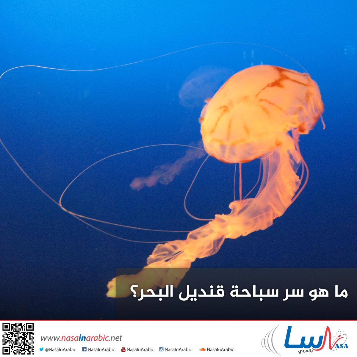 ما هو سر سباحة قنديل البحر؟