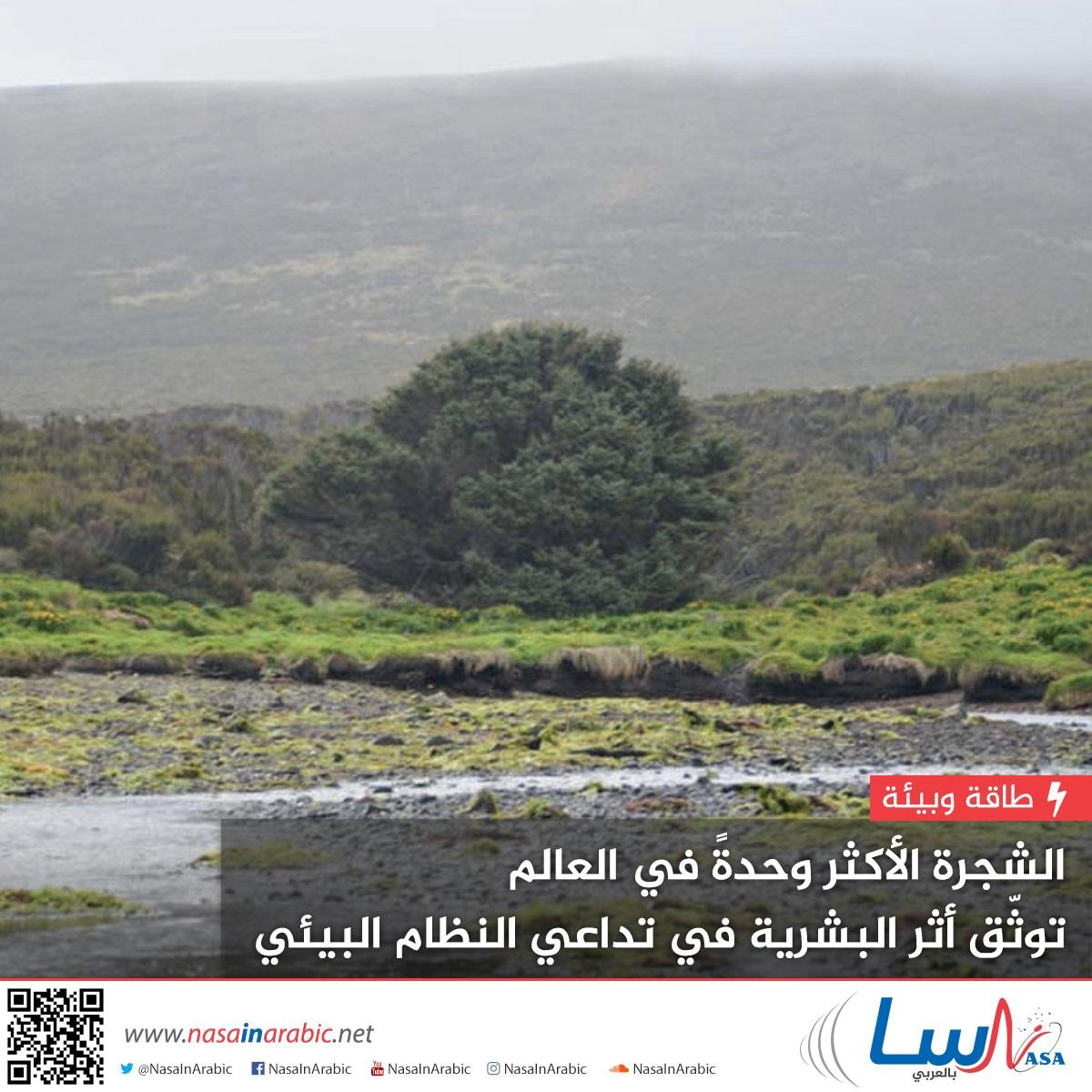 الشجرة الأكثر وحدة في العالم توثق أثر البشرية في تداعي النظام البيئي